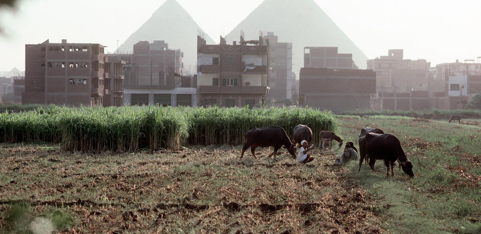 L'Egypte veut profiter des opportunités commerciales liées à la forte demande chinoise de produits agricoles