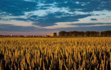 Algérie : Le marché du blé est le second plus important d'Afrique après l'Egypte