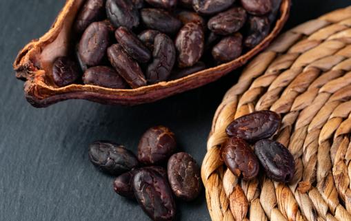 cacao covid