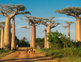 deforestation madagascar