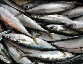 filiere poisson