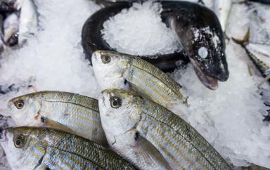poisson pisciculture