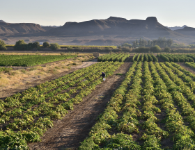 south africa agriculture
